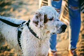 a wet dog on the beach